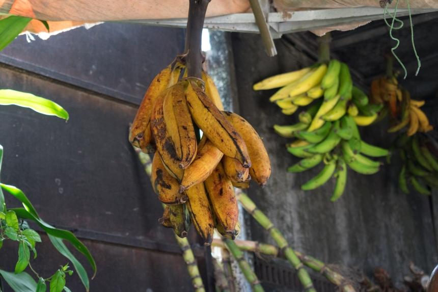 Jamaica-December 20, 2017-12